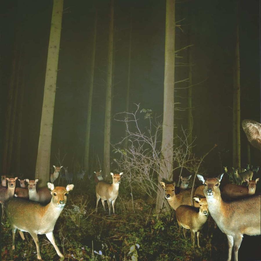 tomhuber-deer