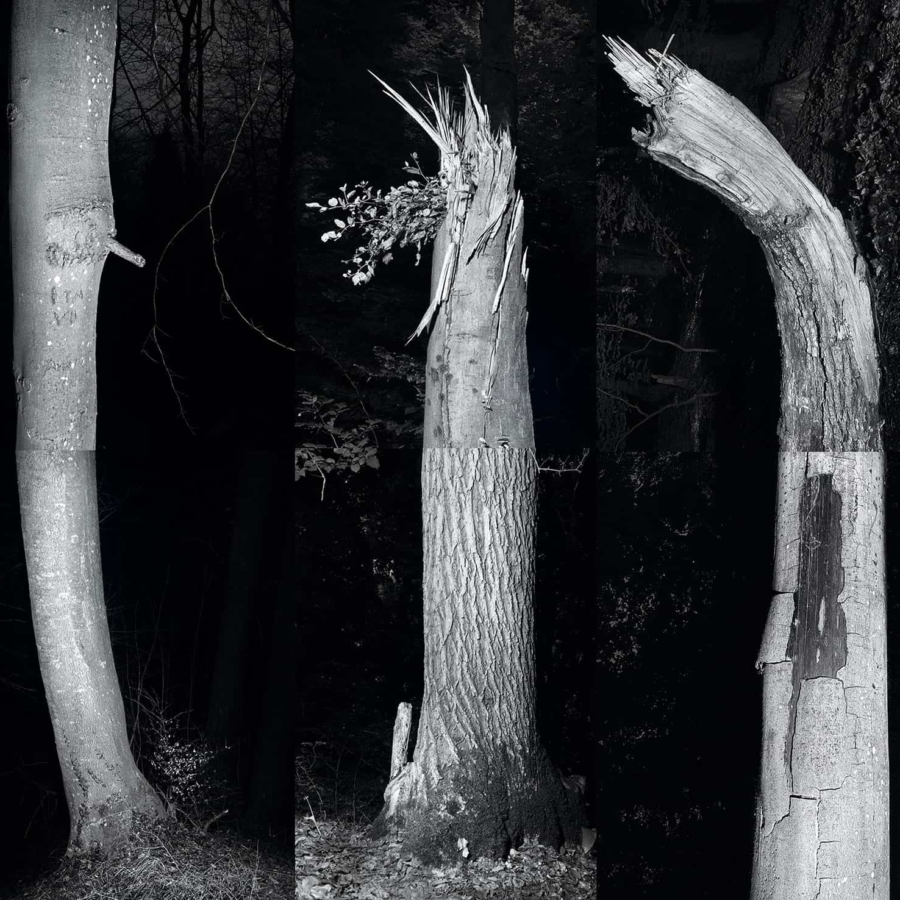 tomhuber-trees